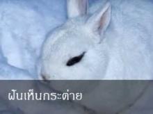 ทำนายฝัน ฝันเห็นกระต่าย