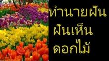 ทำนายฝัน ฝันเห็นดอกไม้